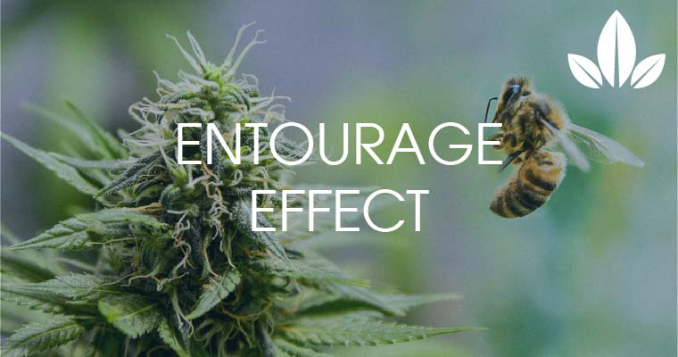 Cannabis-Entourage-Effekt