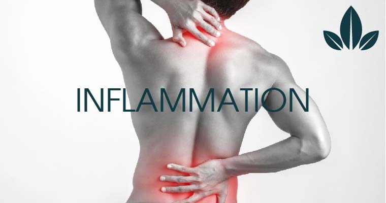 How CBD help in inflammation