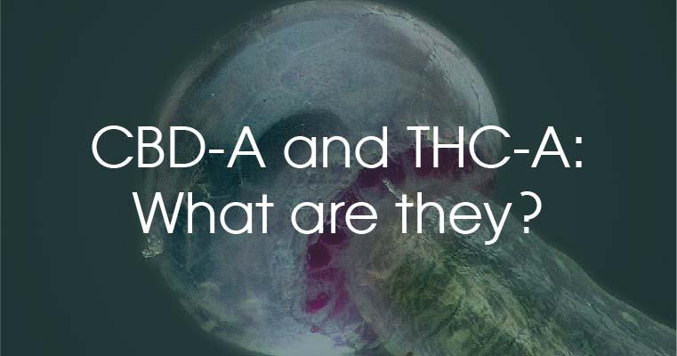 explanation of cbda thca
