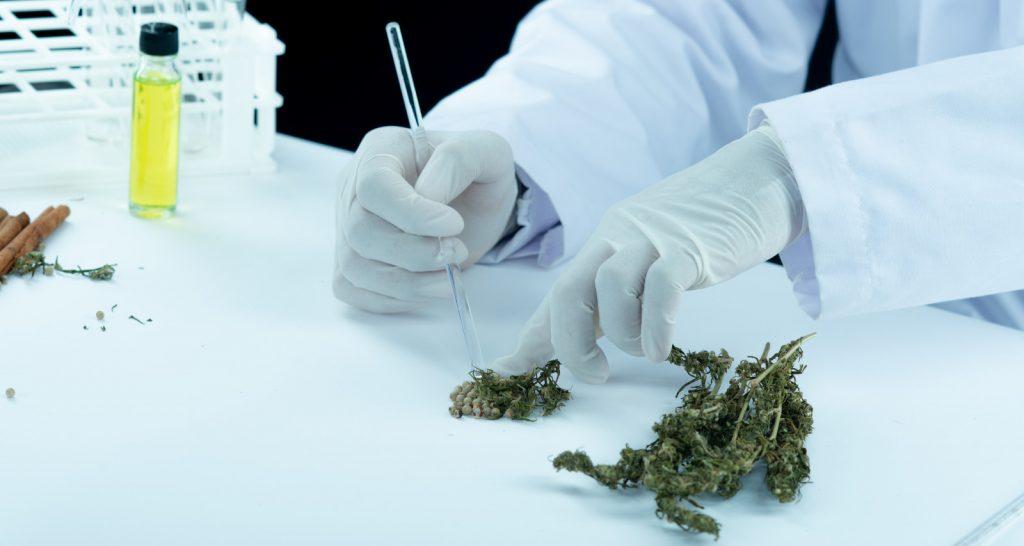cannabis medicina 1